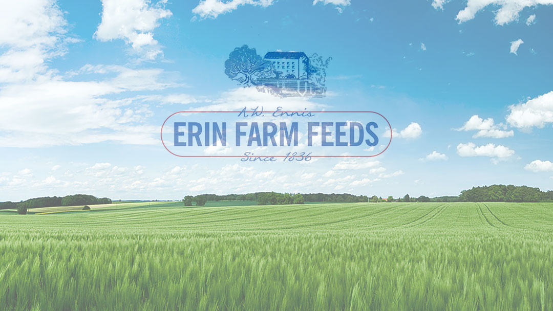 Other related project: A.W. Ennis Erin Farm Feeds